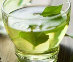 7 Melhores Benefícios do abacate e sua Folha